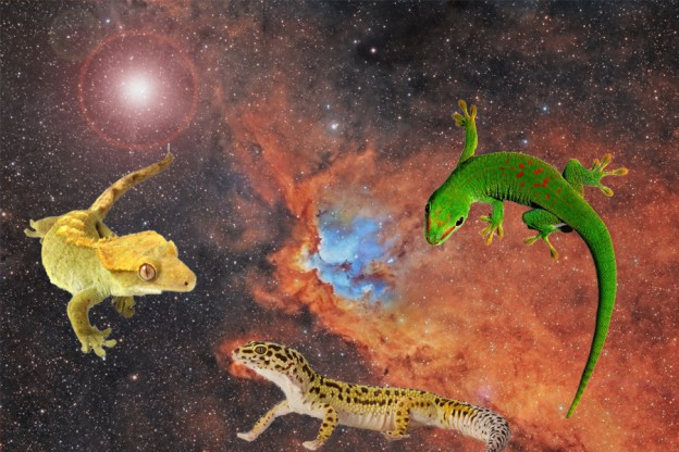 Space Geckos